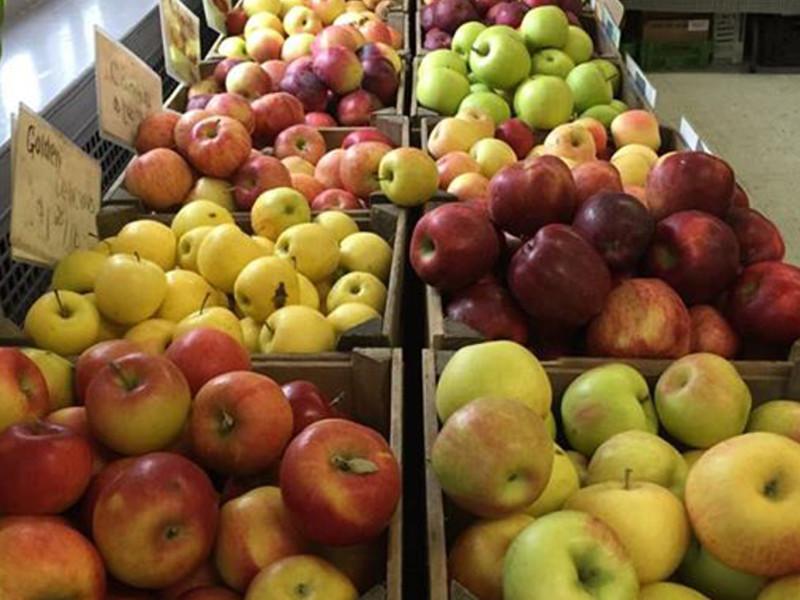 Rhinebeck Farmers Market