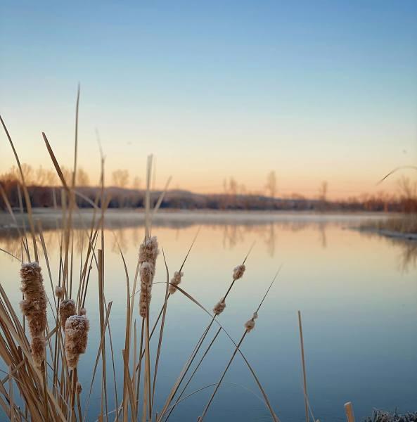 Pat Dawson-Billings Nature Area Featured Image