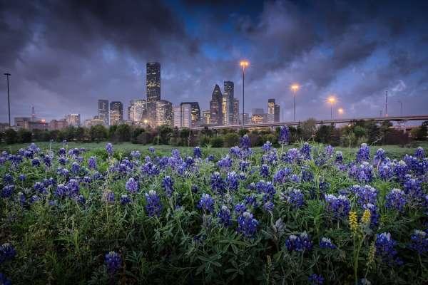 Bluebonnet Houston