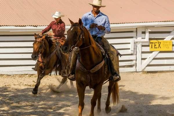 Descubre los ranchos de Houston y sus alrededores