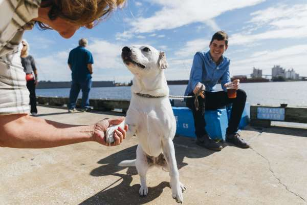 Dog at Sparkman Wharf shaking hands with a friend on the pier.