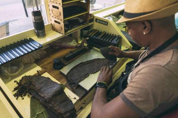 A Tabenero cigar roller cutting the wrap of a cigar.