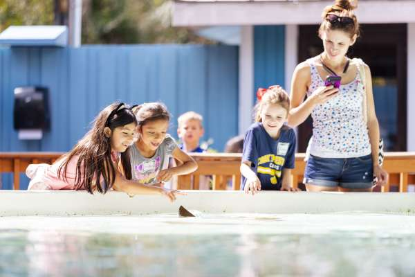 Kids gently touching the sting rays in the touch tank exhibit at ZooTampa.