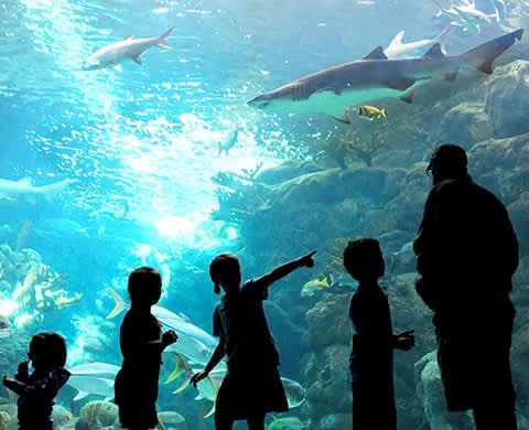 DTN - ROS - Tampa ZooQuarium Tickets - Aquarium