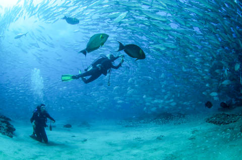 Diving - Cabo Pulmo