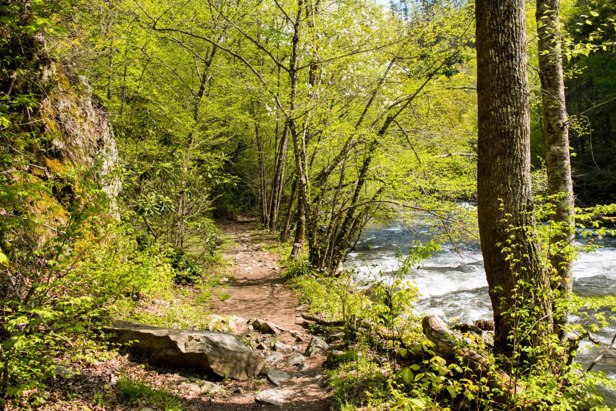 Laurel River Trail | Hiking near Asheville, North Carolina
