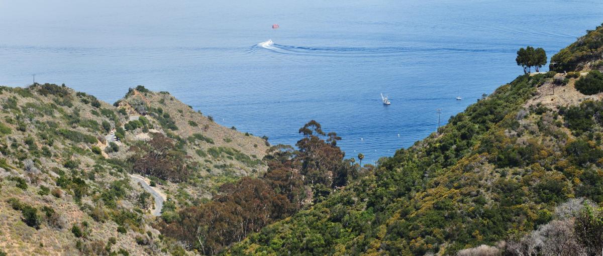www.visitcatalinaisland.com