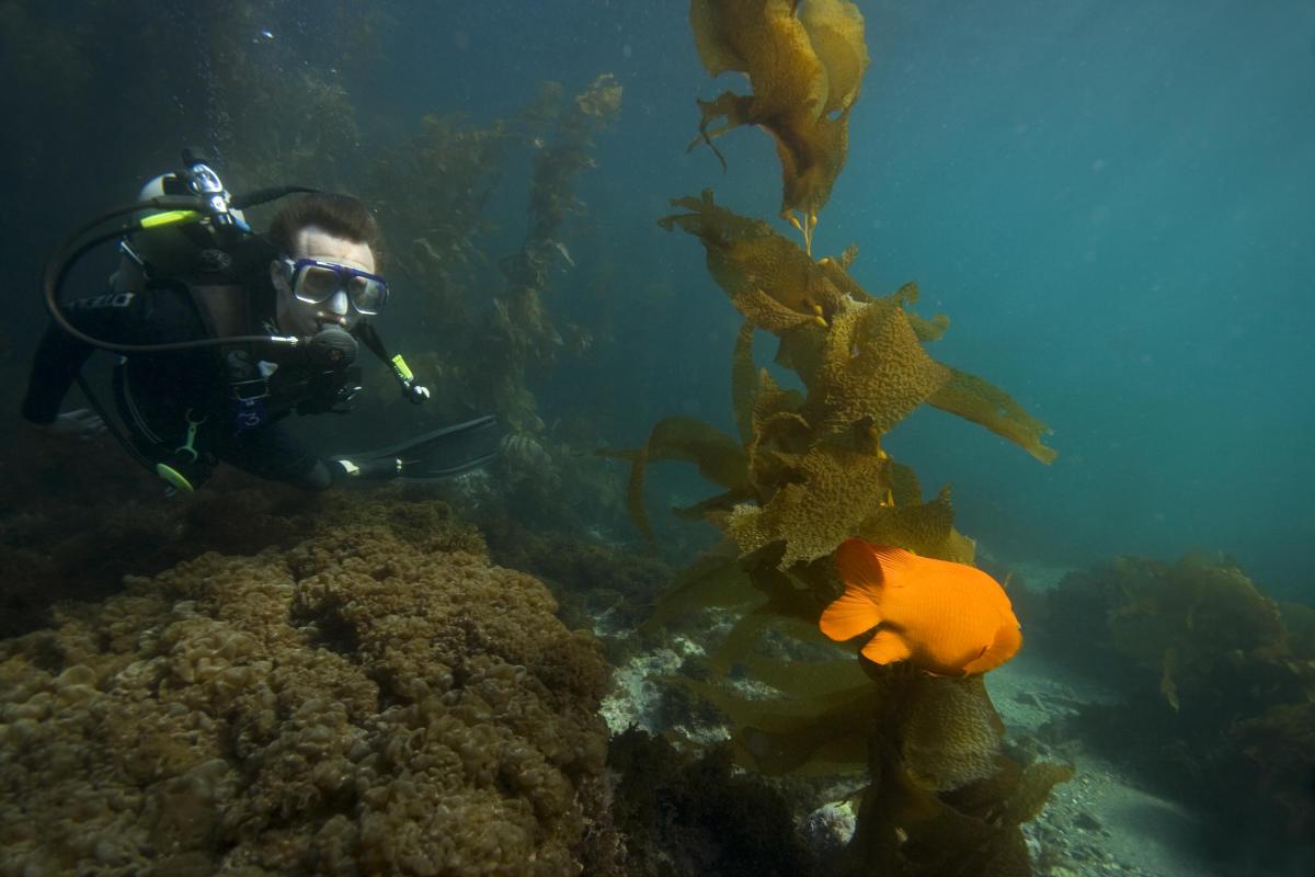 SCUBA Diving Catalina Island