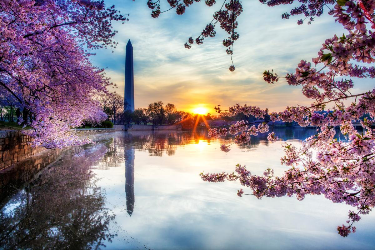 cherry blossom festival 2020 - HD1200×800