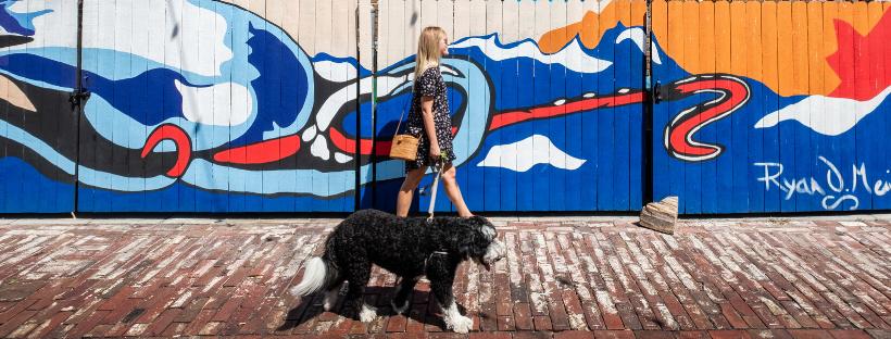 Plan A Pet Friendly Getaway To Coastal Mississippi