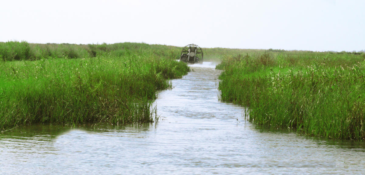 2019 Top Louisiana Airboats Rides and Alligators | Swamps