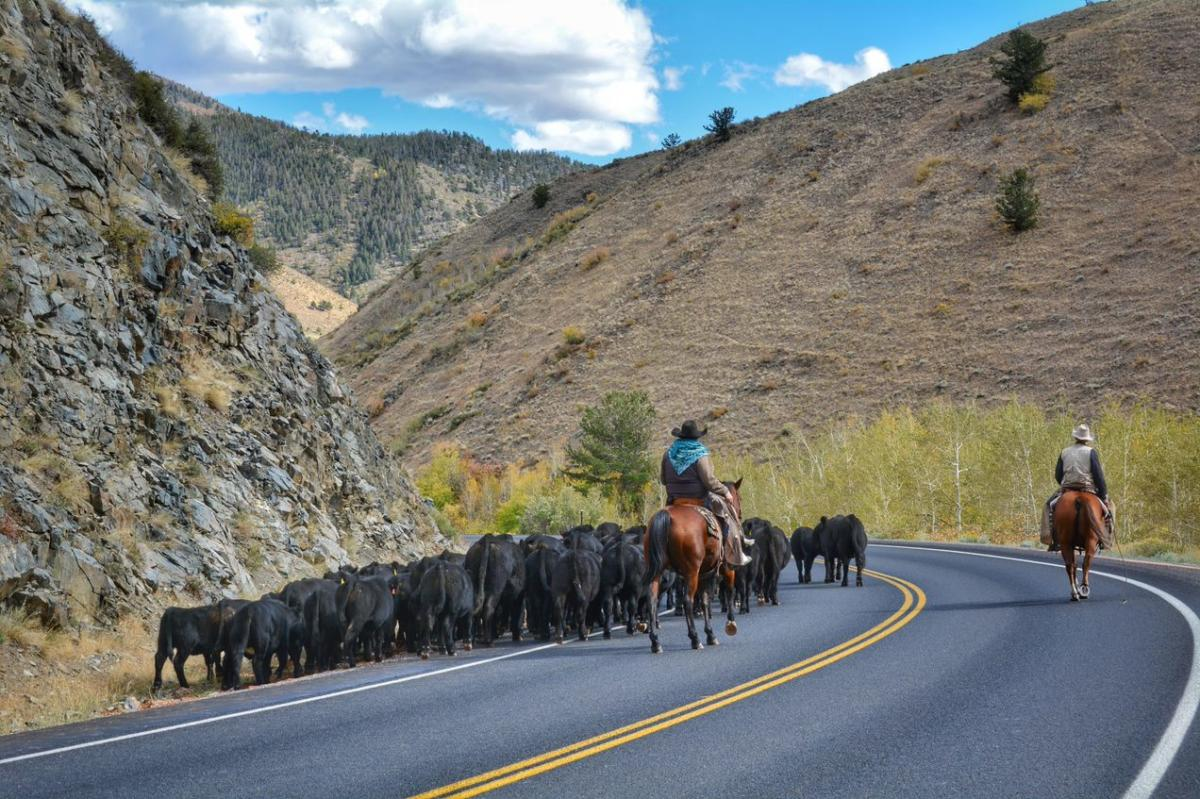 Best Driving Routes to Yellowstone + Sightseeing Stops | Laramie Wyoming