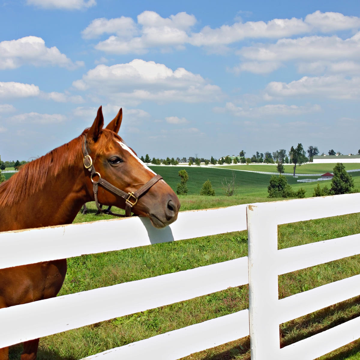 Horse Farm Tours in the Horse Capital of the World