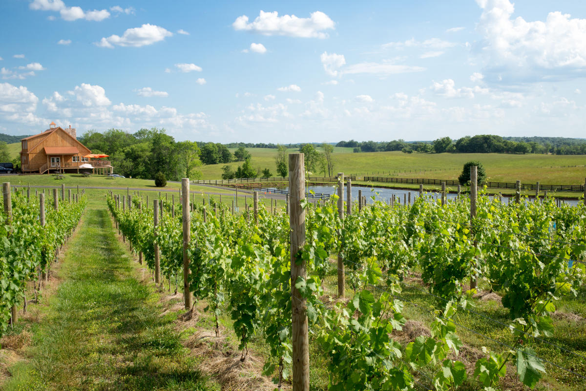 6 Reasons Why Loudoun County, Virginia is a Perfect Destination for Wine Enthusiasts