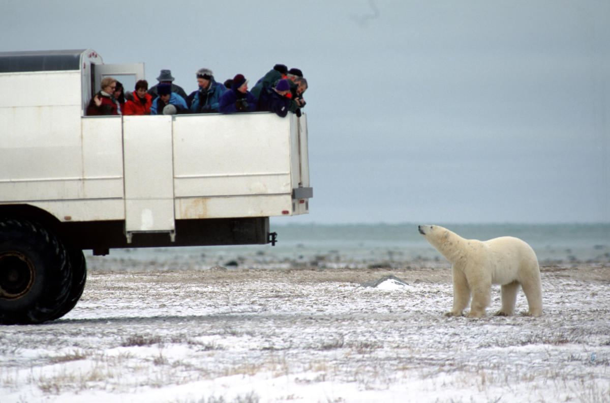 Northern winter safari to see polar bears, northern lights in Churchill Manitoba