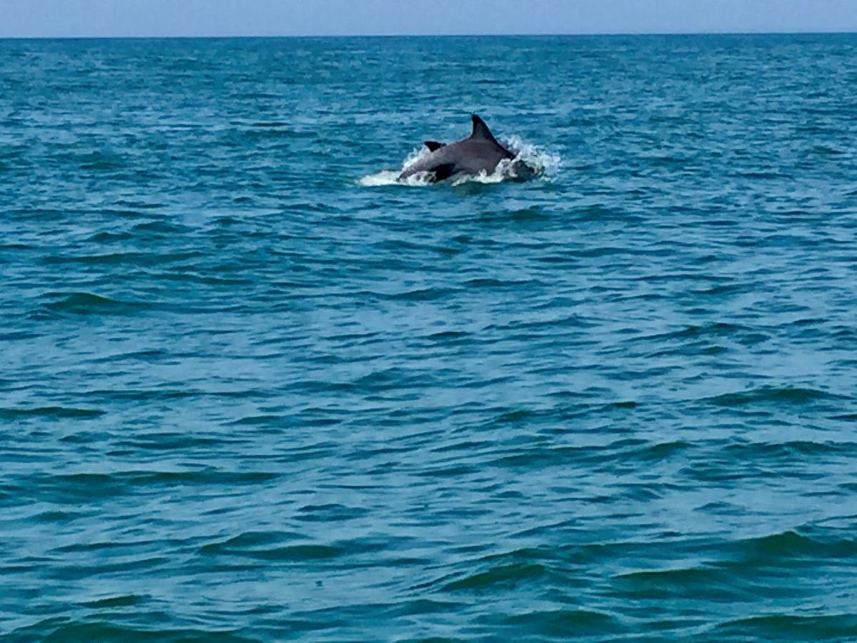 Dolphin Spotting with Blue Wave Adventures Dolphin Watch