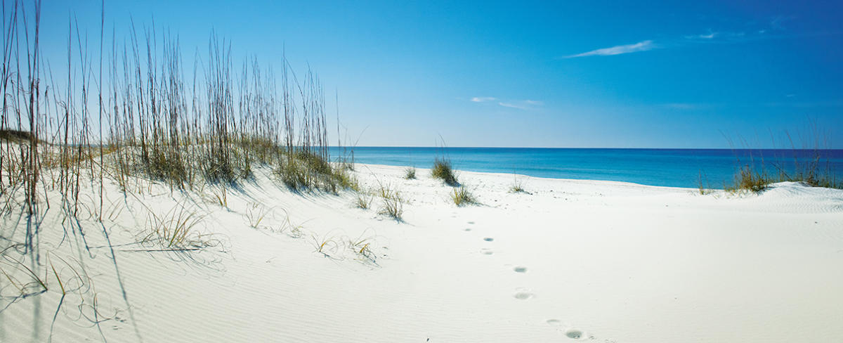 Shell Island Panama City Beach | Getting There, History, Wildlife