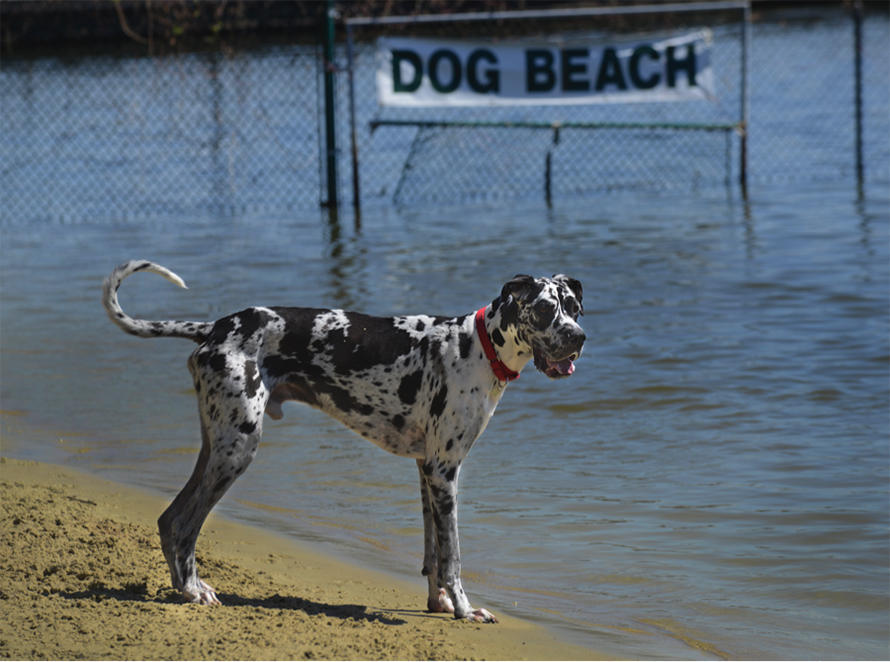 Bring on the Dogs: Pet-Friendly Pensacola