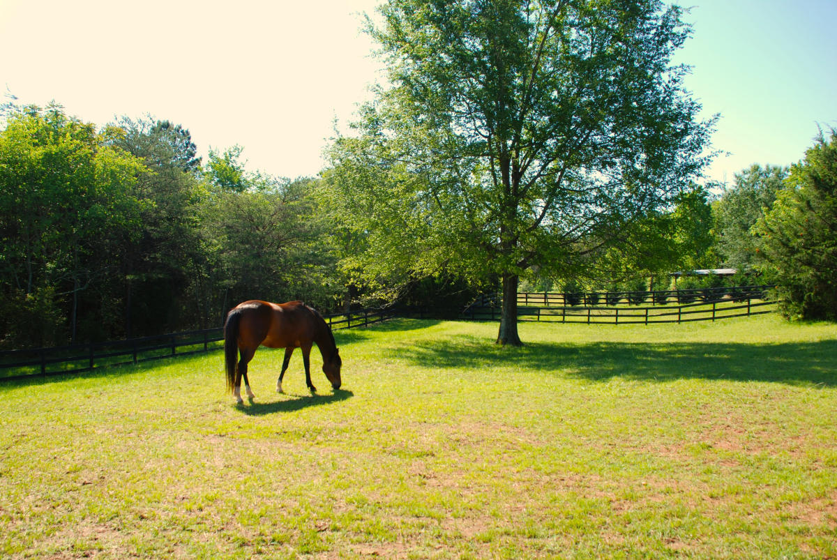 Equestrian Activities In Lake Lure Amp The Blue Ridge Foothills