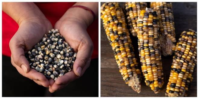 New Mexico's Community Garden Revolution