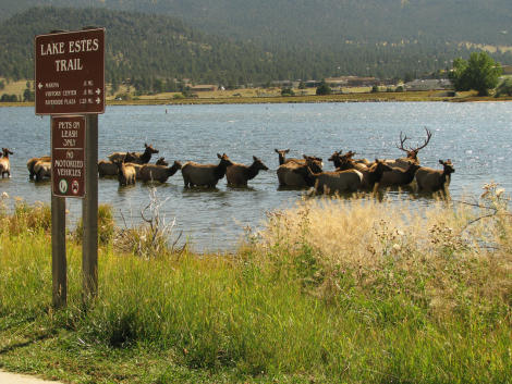 Lake Estes Offers Prime Wildlife Watching