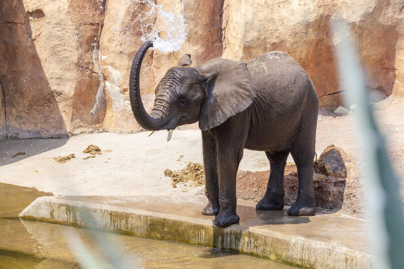 Pictured Above: An Elephant Cooling Down at ZooTampa at Lowry Park