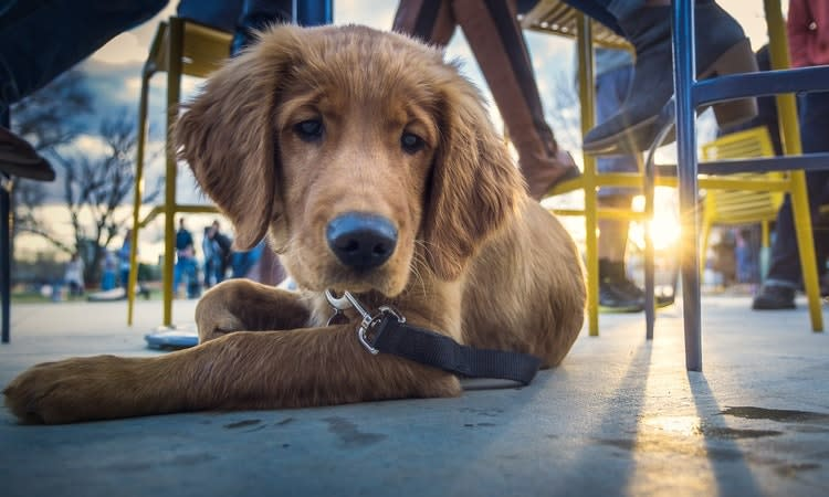 dog friendly patios in houston