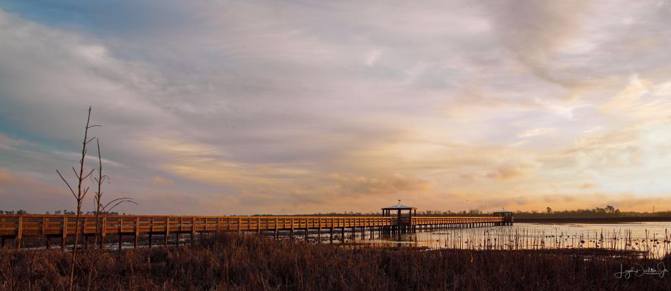 Beaumont Cattail Marsh