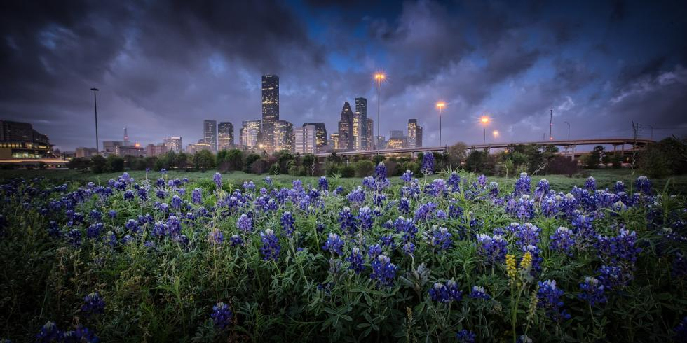 Bluebonnet Houston