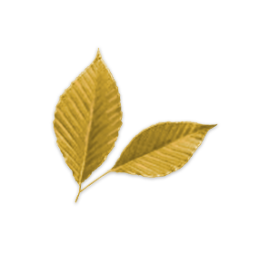 Fall Leaf Identifier | Leaves and Fall Foliage of New York