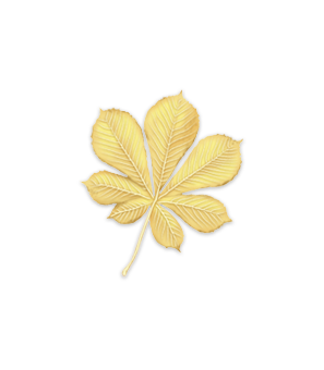 Common Horse-Chestnut leaf