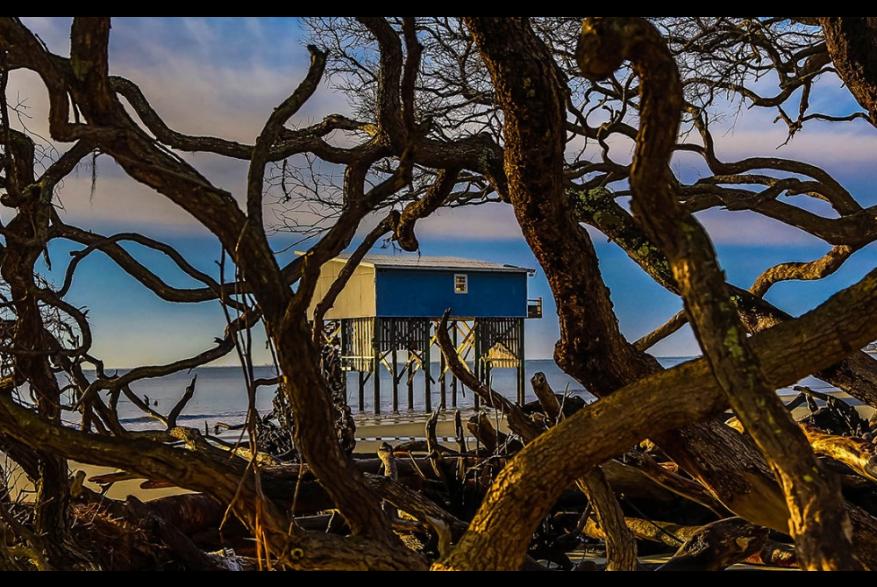 Driftwood and beach house