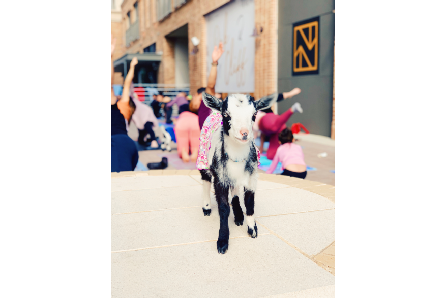 GoatYoagNovel14.jpg