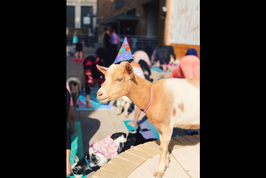 GoatYoagNovel1.jpg