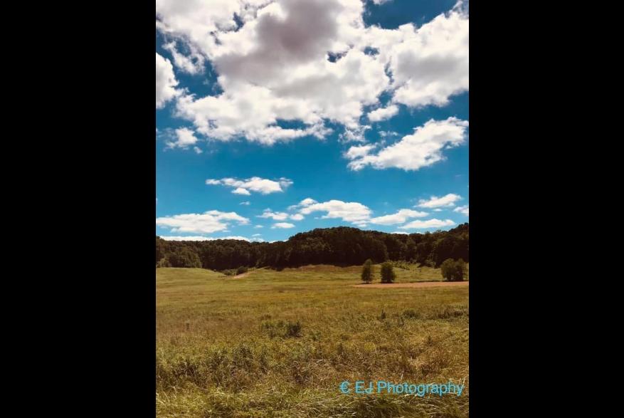 #CaptureTheKentuckyWildlands Photo Contest May/June 2021 - Natural World - Blue Skies Photo by Erica Stevens