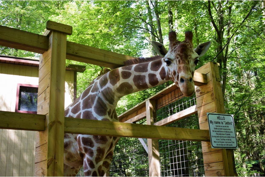 Plan A Trip to Claws N Paws and Explore the Family Fun Side of the Poconos