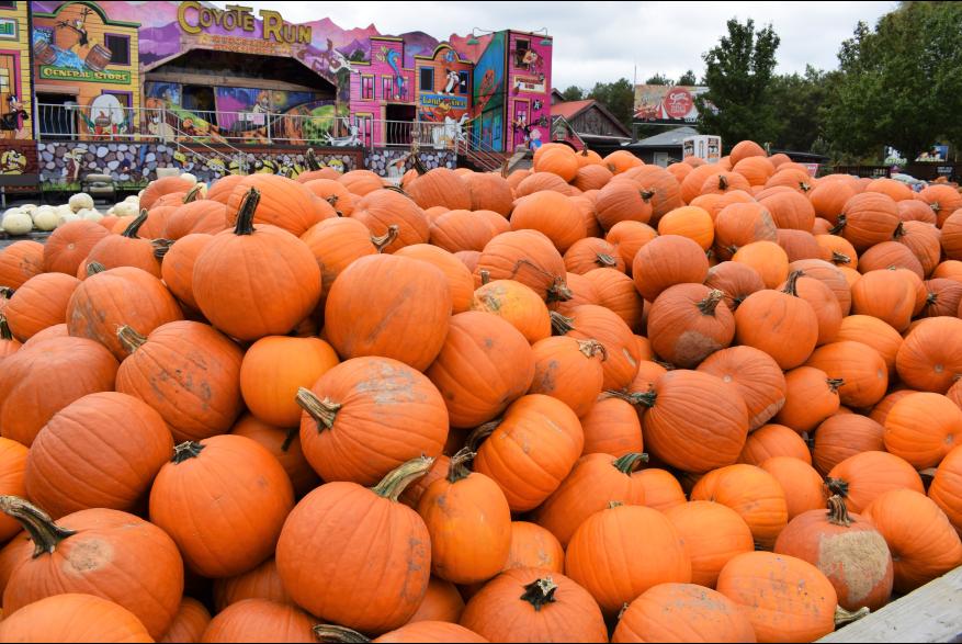 Attend A Fall Festival in the Poconos