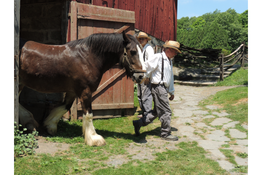 Preparing the Clydesdale for a Wagon Ride at Quiet Valley