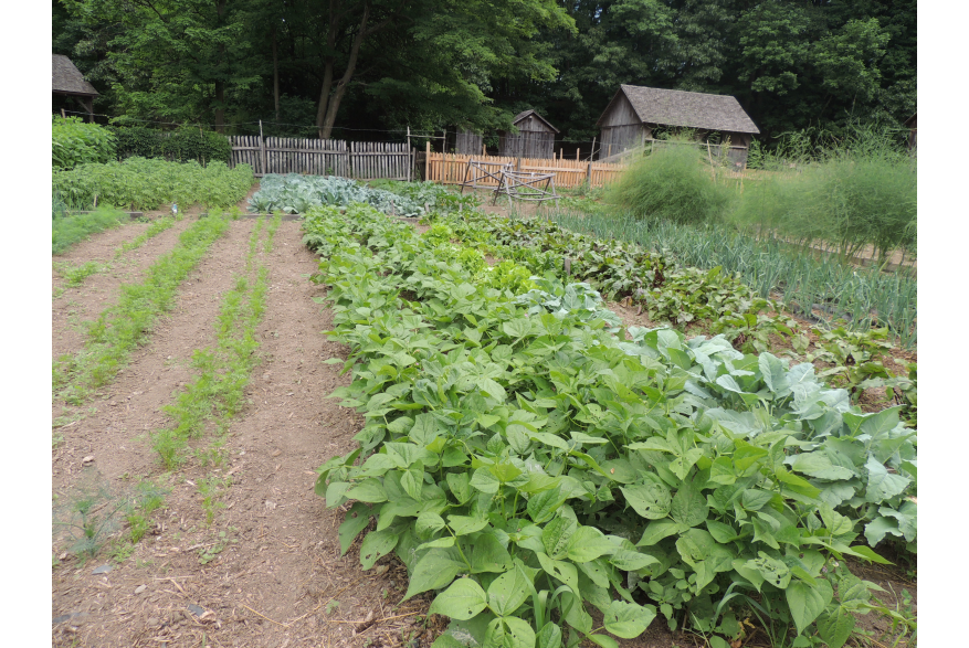 Summer Crops at Quiet Valley in the Pocono Mountains