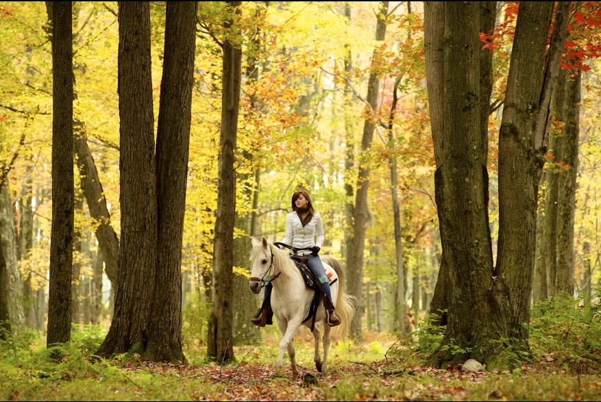 Fall Pocono Horseback Ride