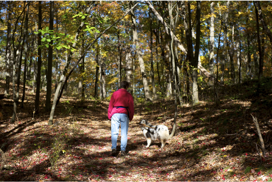Furry Friends Welcome in the Pocono Mountains