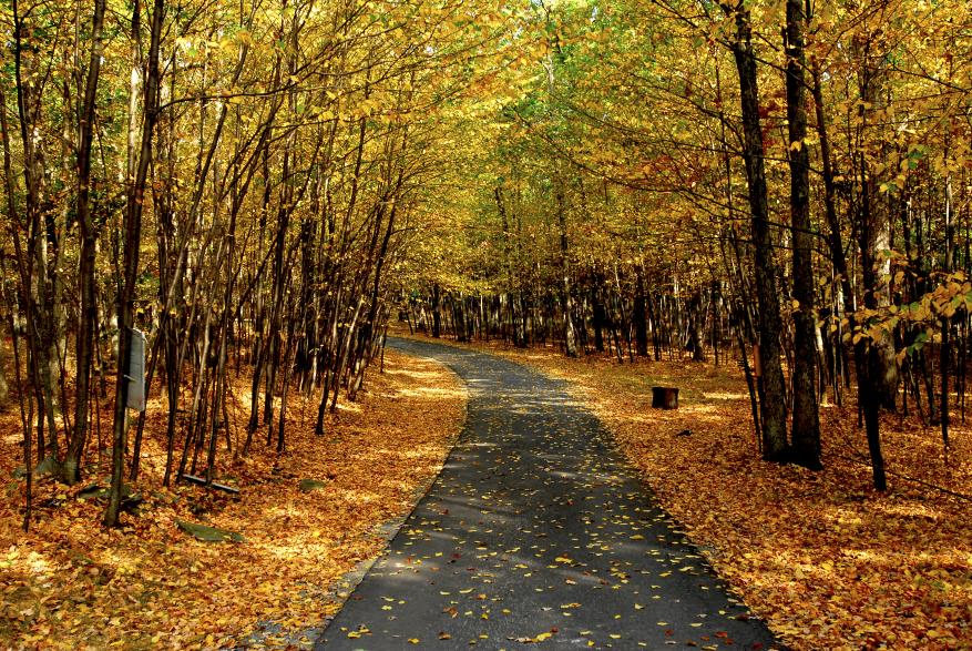 Fall Foliage in the Poconos