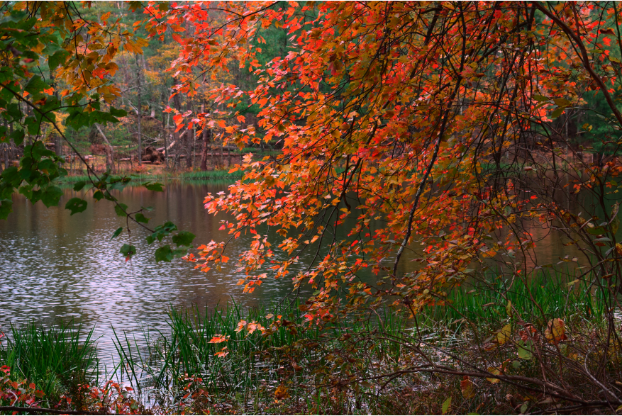 Fall Foliage at PEEC in the Pocono Mountains