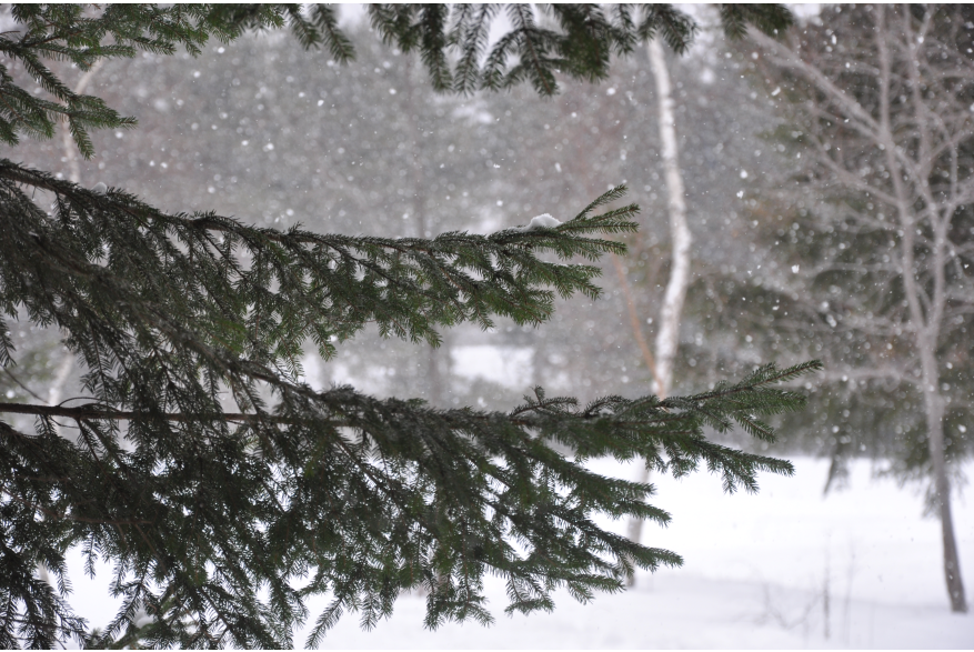 Winter in the Pocono Mountians