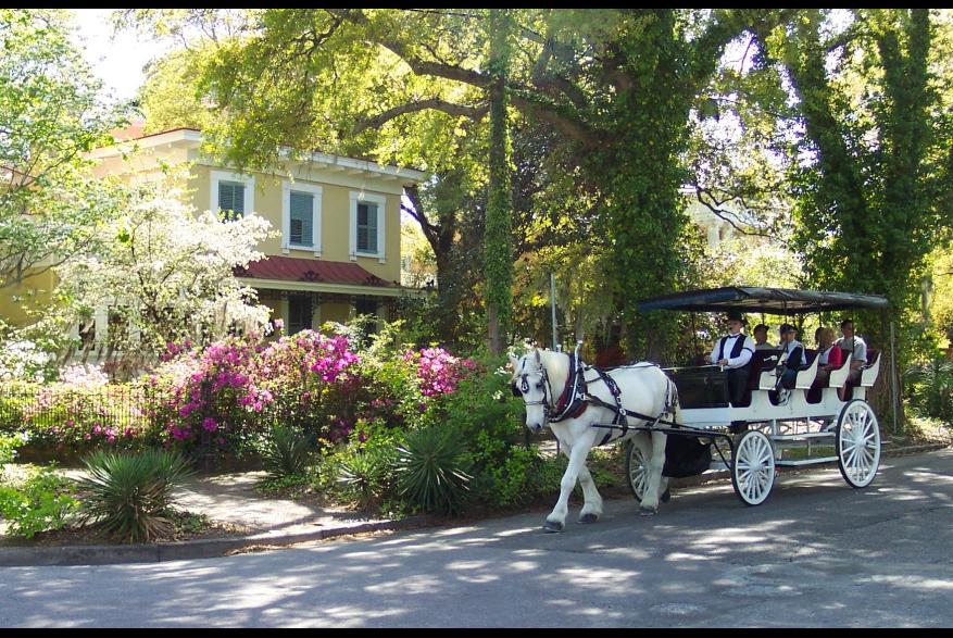 horse pulling carriage on Orange Street