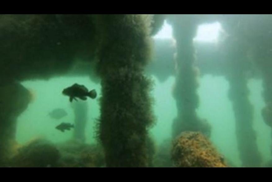Kure Beach Dive Site