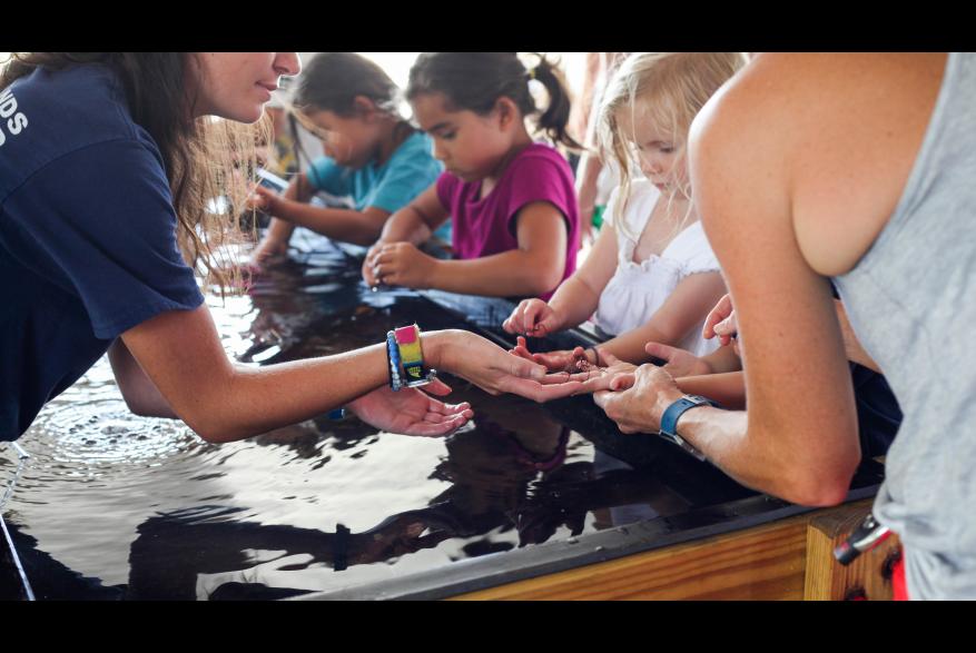Touch Tank Tuesdays at NC Coastal Education Center