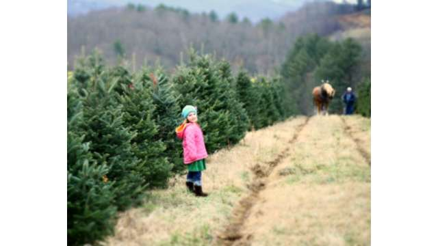 Brown's Choose and Cut Christmas Tree Farm | Boone, NC