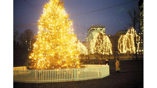 Christmas Tree- Boston Common