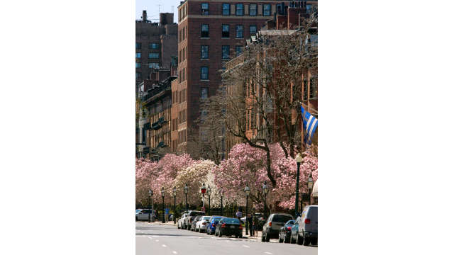 Beacon Street in the Spring